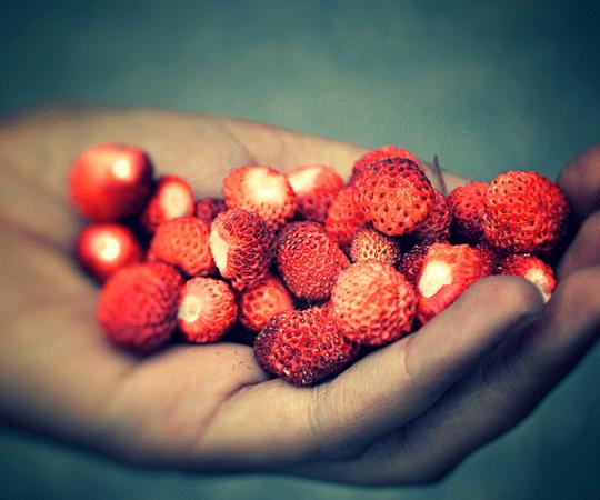 Berry Wild