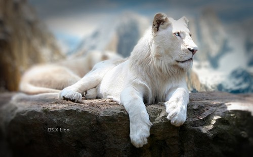Authoritative Pose- Mac OS X Lion Wallpaper