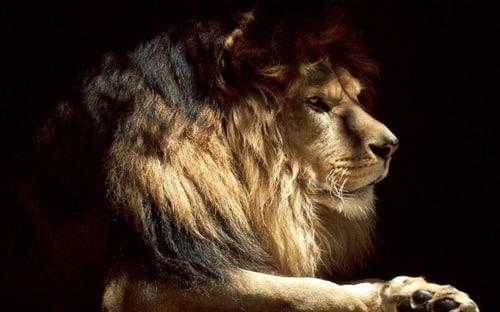 Lion Mane-Mac OS X Lion Wallpapers