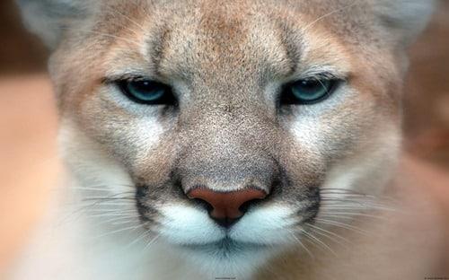 Mac-OS-X-Puma That Look